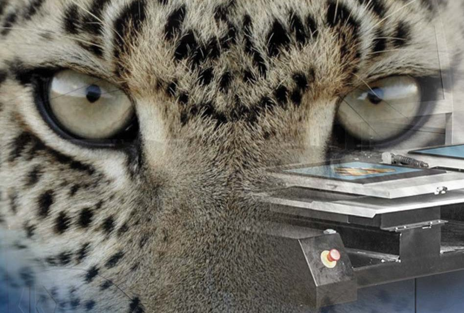The lion and cheetah of garment printing