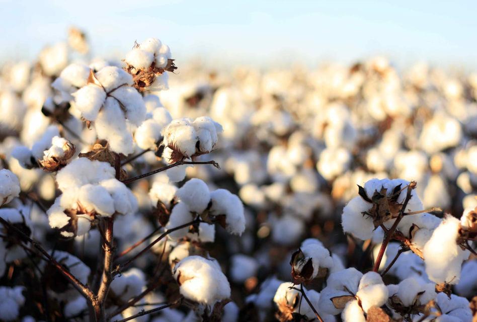 Textile Exchange introduces Biodiversity Benchmark tool