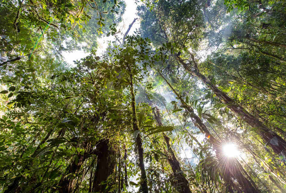 Neutral purchases land in Amazon Rainforest as a gift for customers